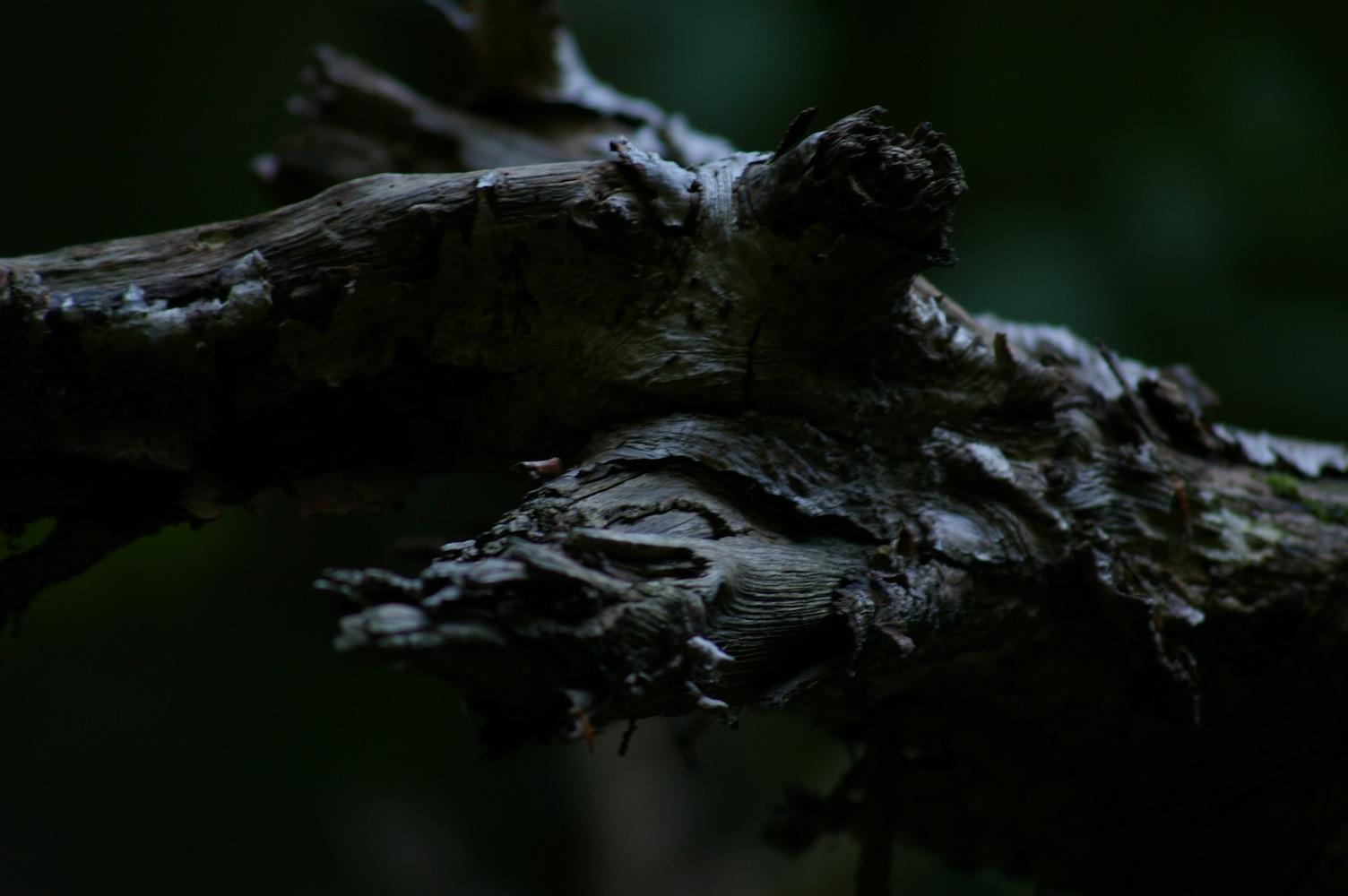 Hels Holz